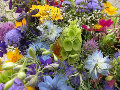 Flowers-from-the-Farm