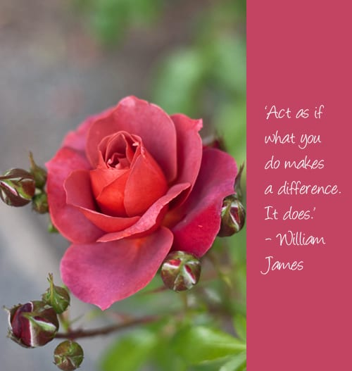 Pearls-of-Wisdom-Image-Rose-Flowerona
