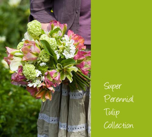 Sarah-Raven-Super-Perennial-Tulip-Collection