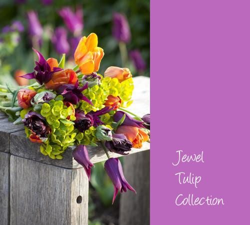Sarah-Raven-Jewel-Tulip-Collection