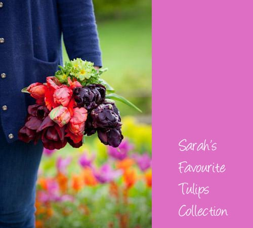 Sarah Raven's-Favourite-Tulip-Collection