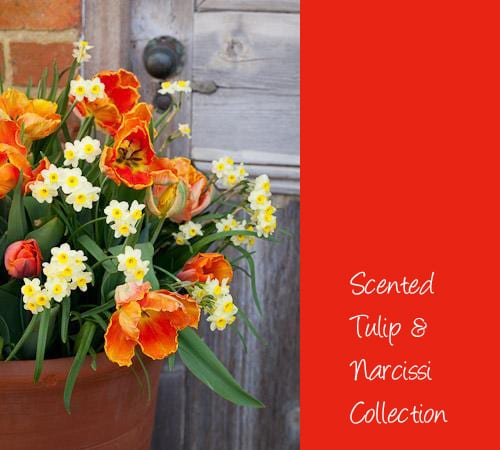 Beautiful tulip collections from Sarah Raven