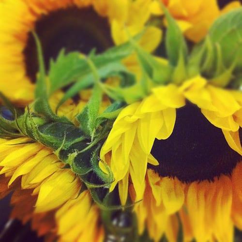 Covent-Garden-Academy-of-Flowers-Flowerona-Sunflowers