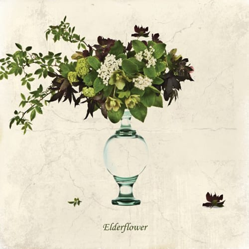 Mimi-Collection-Elderflower-Dipingo Design