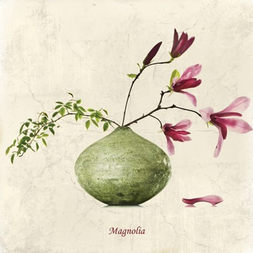 Mimi-Collection-Magnolia-Dipingo Design