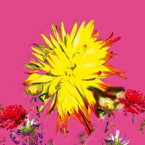 'Pink Flower' - Jason D Prints