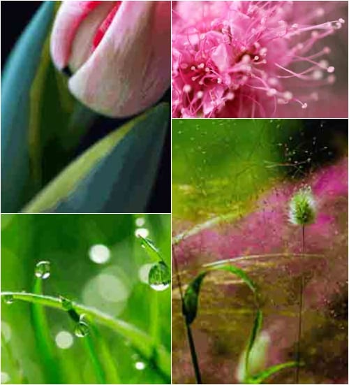 The RHS Photographic Competition 2012