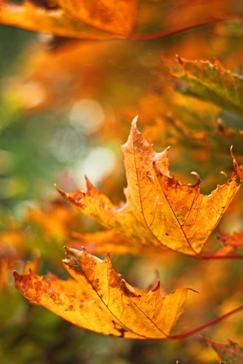 Flowerona-Autumn-Leaves