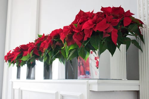 Modern christmas home decor - Poinsettia Christmas Table Design By The Urban Flower Firm