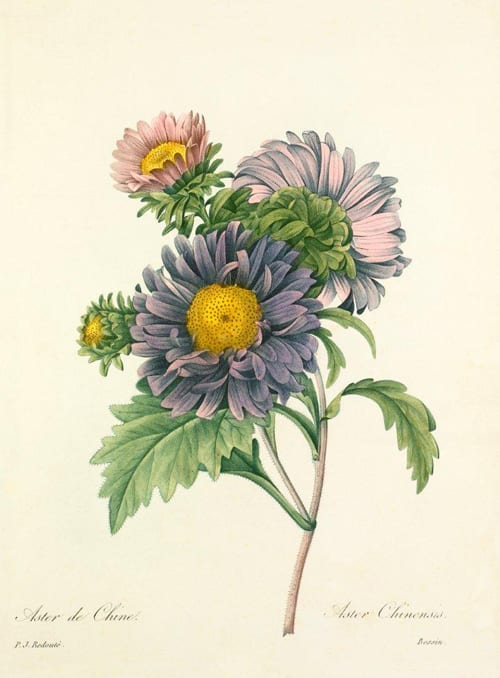 Beautiful Royal Horticultural Society floral prints from Easyart