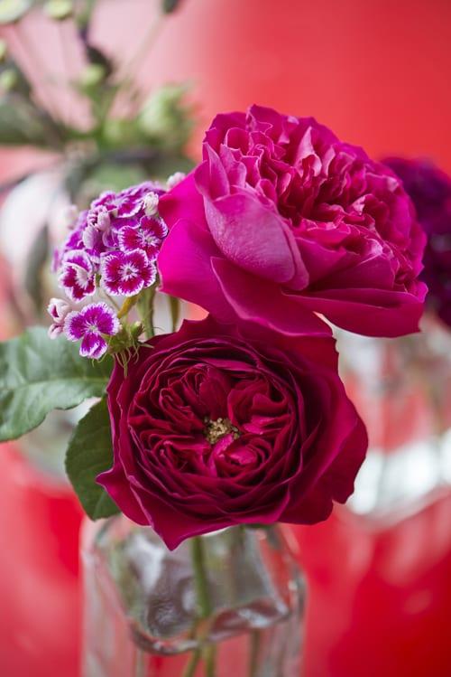Kate-&-Darcey-in-bottle-David-Austin-Roses