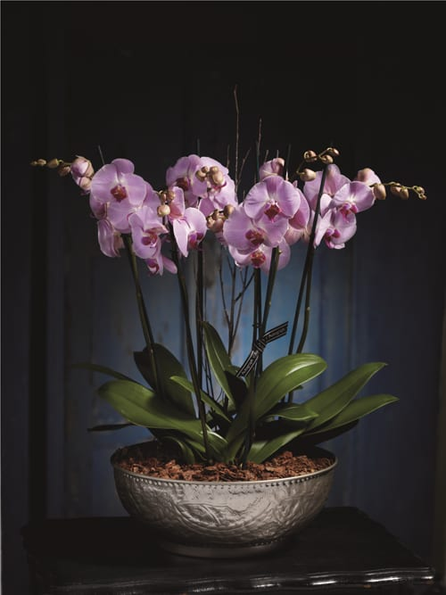 Autograph-Mother's-Day-Orchid-Bowl-Marks-&-Spencer