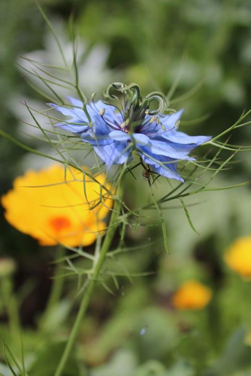 Bloom-and-Blossom---Nicola-Rotton--nigella