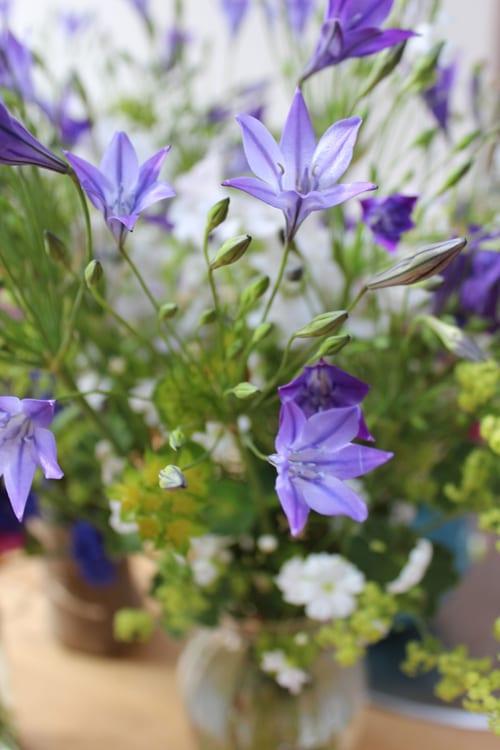 Bloom-and-Blossom---Nicola-Rotton---tritelia-and-alchemilla-mollis