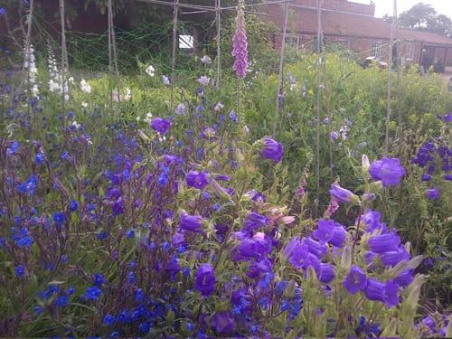 Catkin-Flowers