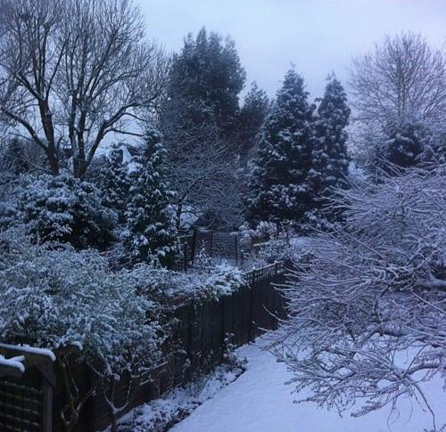 Flowerona-Snow-January-2013