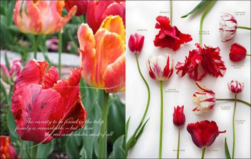 Flowers-by-Carolyne-Roehm-Tulips