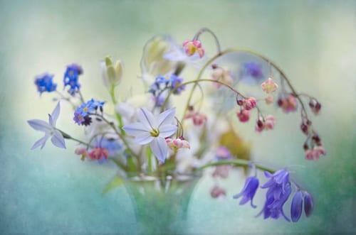 Jacky-Parker-Spring-Dream