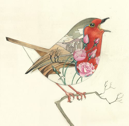 robin-card-DM-Collection