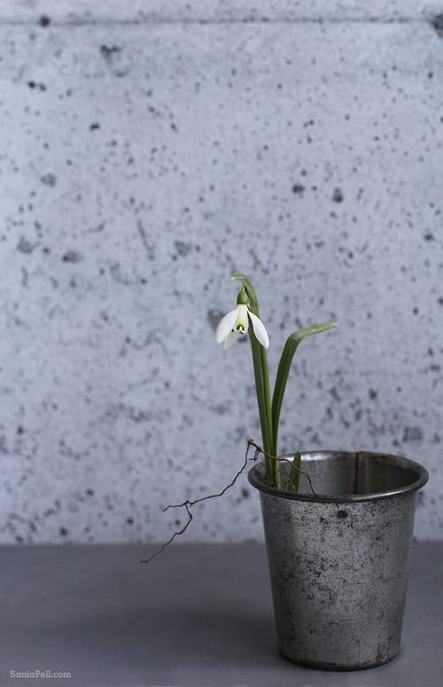 Sania-Pell-Snowdrops