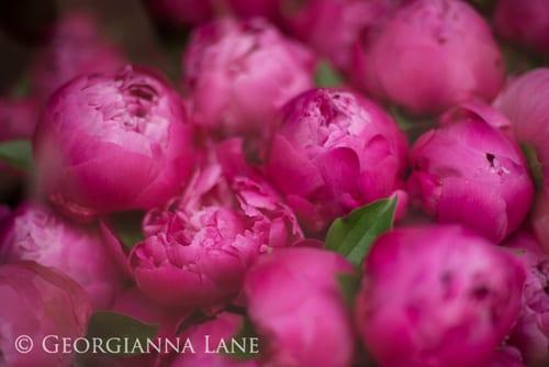 Georgianna-Lane