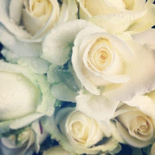 Roses-in-the-Rain-Flowerona