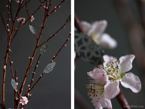 Sania-Pell-Blossom-5