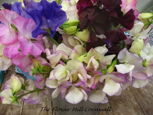 The-Flower-Mill-Cornwall