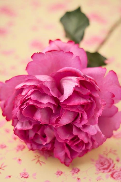 Yves-Piaget-Rose-Flowerona