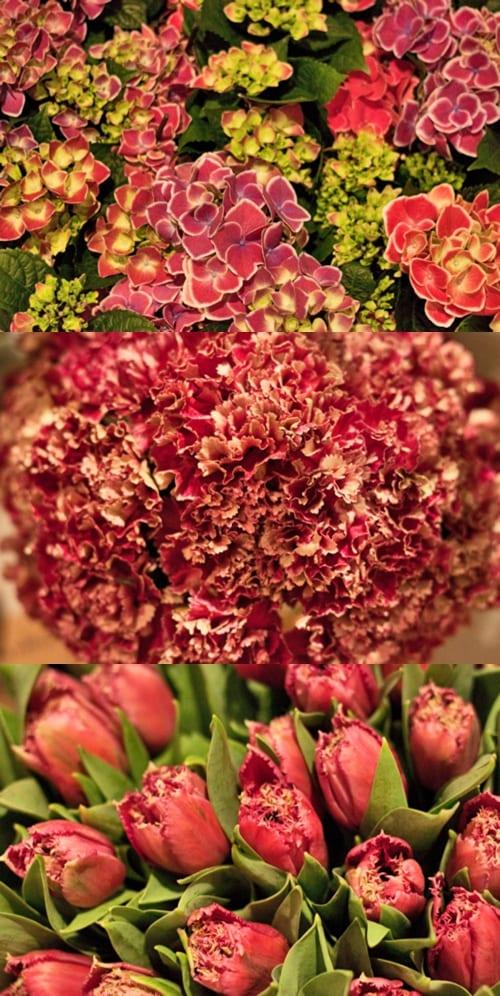 FleuraMetz-Flowerona
