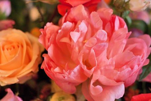 Hayford-&-Rhodes-Flowerona