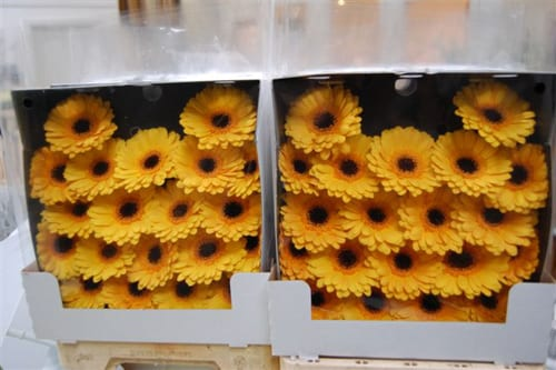 Mood Flowers Flower Dress