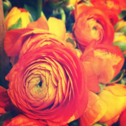 Ranunculus-Flowerona
