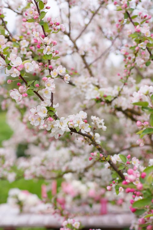 Floret-Flower-Farm-Georgianna-Lane