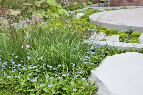 RHS Chelsea Flower Show 2013 – Jinny Blom's Sentebale Forget-Me-Not Show Garden sponsored by B&Q