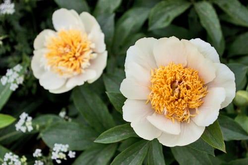 Jo-Thompson-Fera-Show-Garden-RHS-Chelsea-Flower-Show-Flowerona-1