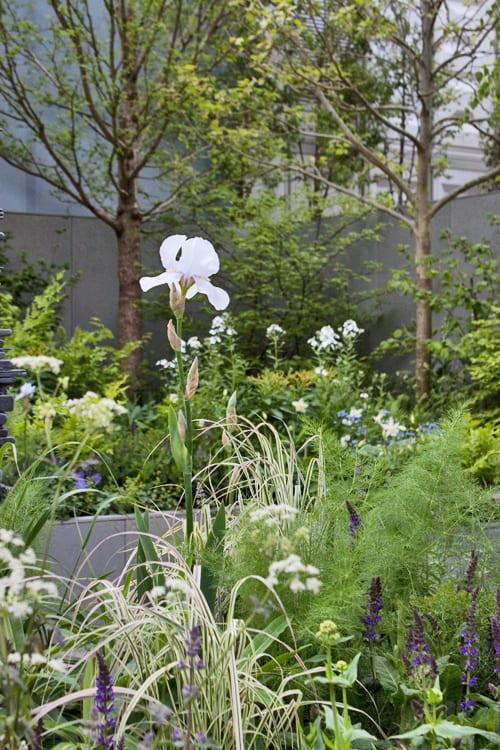 Jo-Thompson-Fera-Show-Garden-RHS-Chelsea-Flower-Show-Flowerona-2