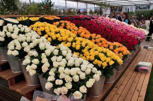 RHS-Chelsea-Flower-Show-2013-Marks-&-Spencer-Flowerona-7