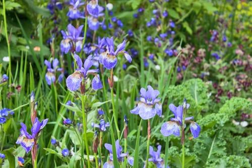Show-Garden-RHS-Chelsea-Flower-Show-Flowerona-3