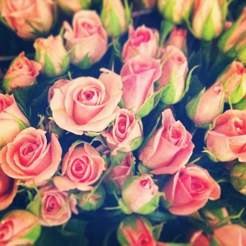 Spray-Roses-McQueens