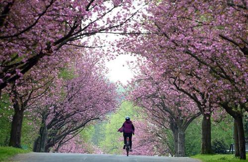 Spring-Blossom-DPA