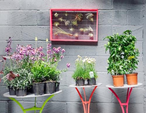 The-Balcony-Gardener-Pop-Up-Shop-Squint-Chelsea-Fringe-3
