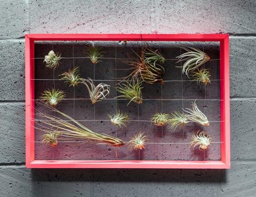 The-Balcony-Gardener-Pop-Up-Shop-Squint-Chelsea-Fringe-4