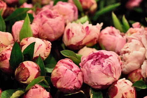 British-Peonies-New-Covent-Garden-Flower-Market-Flowerona