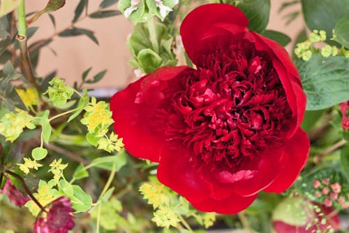 Guildford-Cathedral-Flower-Gala-Flowerona-2