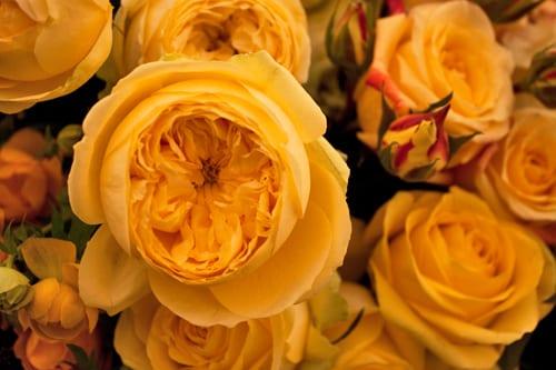 Guildford-Cathedral-Flower-Gala-Robbie-Honey-Demo-Flowerona-11