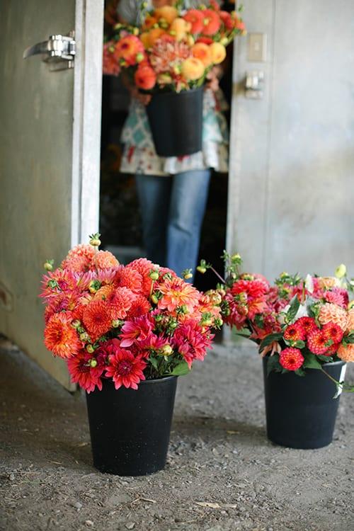 Michele-M-Waite-Floret-Flower-Farm