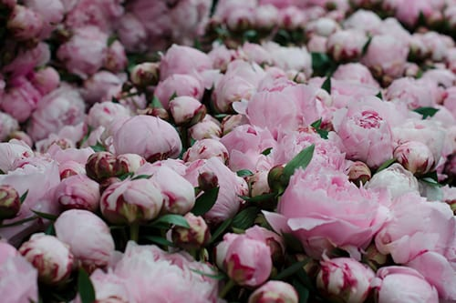 My-Creative-Peonies-Columbia-Road