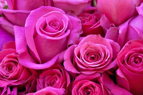 Rebecca-Louise-Law-Floral-Installation-Clifton-Nurseries-Flowerona-3