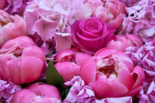 Rebecca-Louise-Law-Floral-Installation-Clifton-Nurseries-Flowerona-4